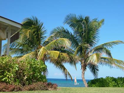 blue-sky-palm.jpg